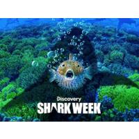 Discovery Channel: Shark Week: Season 2019 (Digital HD